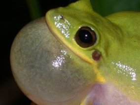 Amphibian and Reptile Species Conservation