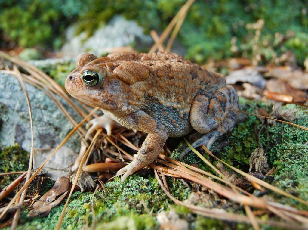 The Secret Lives of Amphibians, May 3, 2021