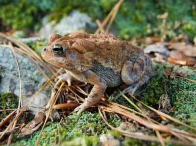 PARC Amphibian Week