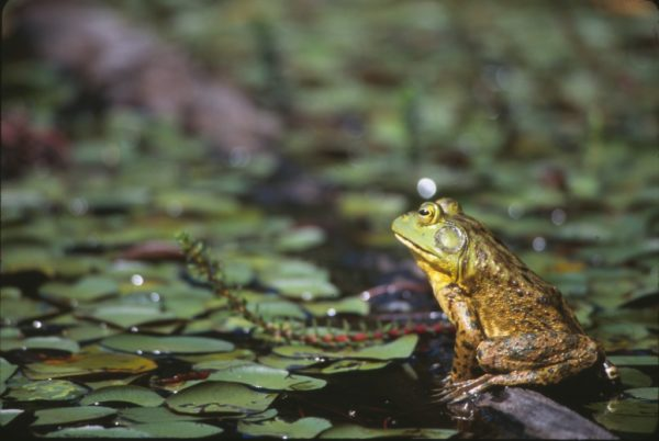 Amphibian Week Resources: Education and Curriculum