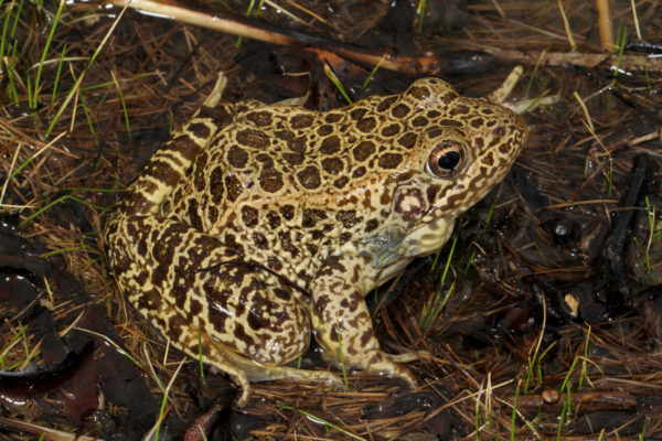 Amphibian Week Resources: Videos