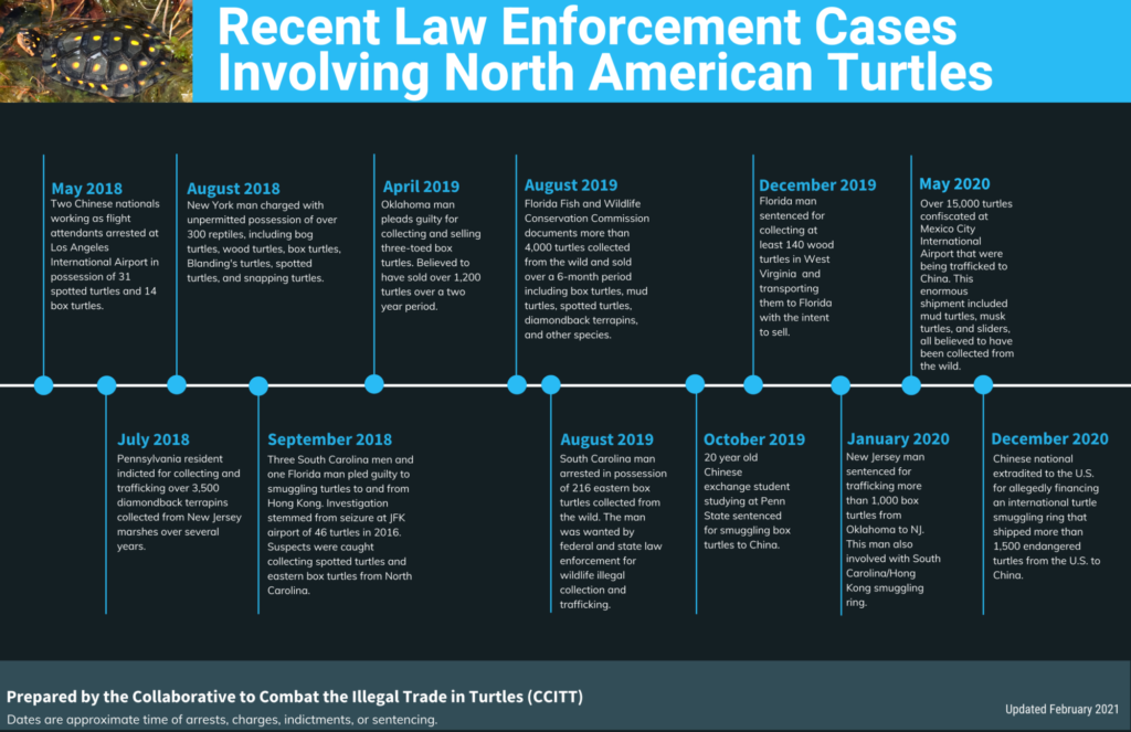 Recent Law Enforcement Cases Involving North American Turtles