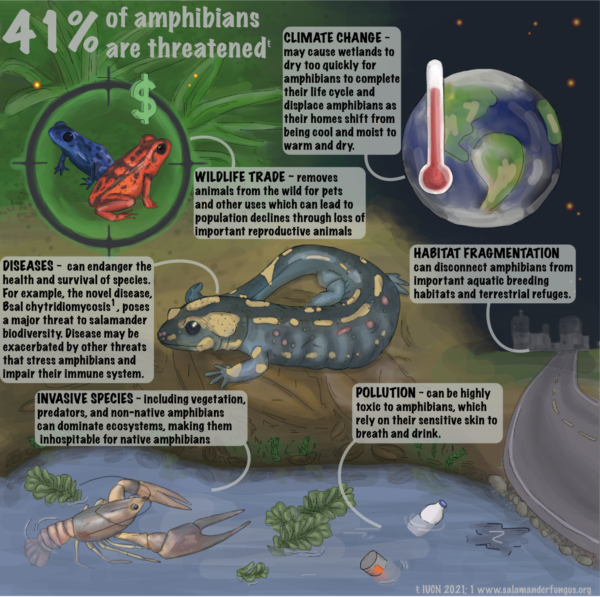Threats to Amphibians (detailed) infographic, created by Nina McDonnell