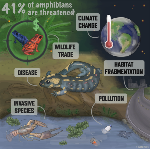 Threats to Amphibians (simple) infographic, created by Nina McDonnell