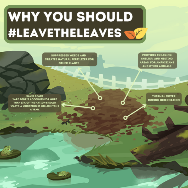 Leave the Leaves infographic, created by Sydney Horan