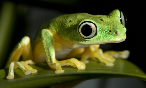 Can you tell a fantastic frog from a terrific toad?